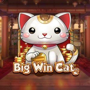 Playngo big win cat